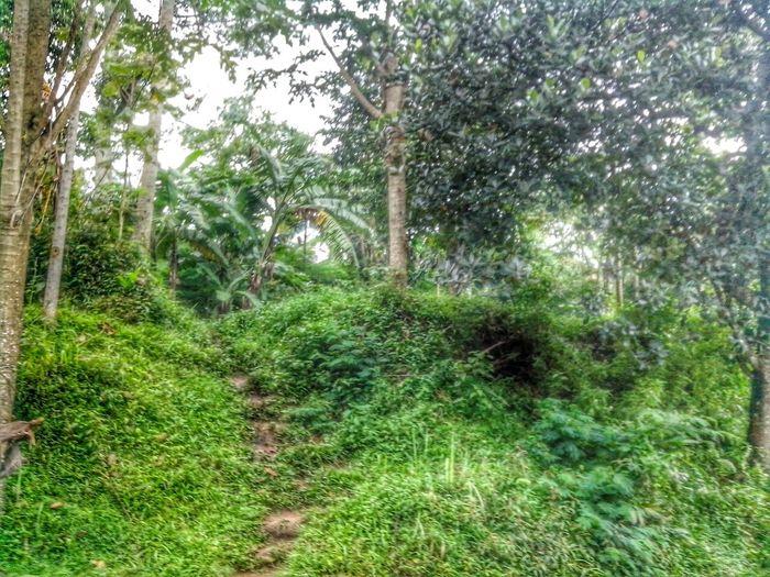 Stairway To Village Stairway Ladder Forest Trees EyeEm Nature Lover Landscape Nature Tracks