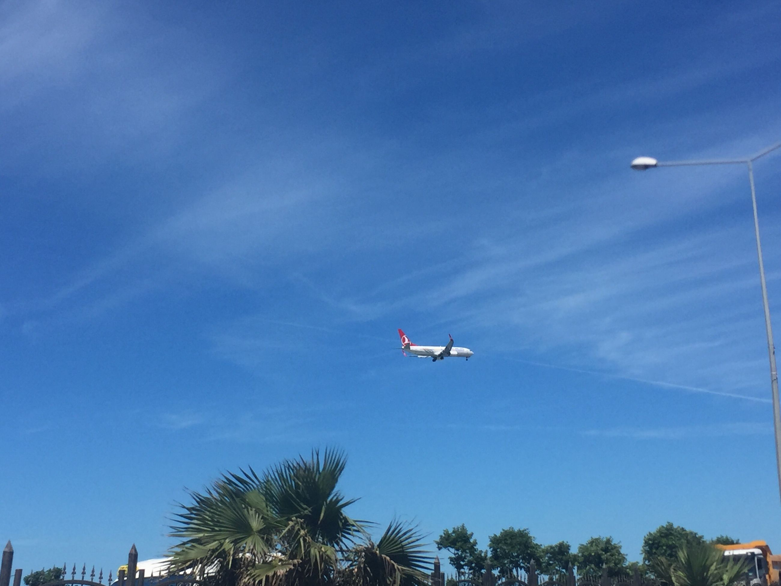 flying, low angle view, tree, airplane, sky, palm tree, blue, day, mid-air, transportation, air vehicle, outdoors, no people, nature, beauty in nature, vapor trail