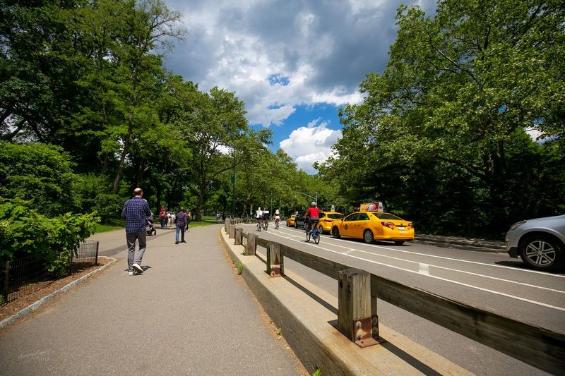 Central Park EyeEmNyc Central Park - NYC Onefotos Eyeemghana Dorofoto Tree Plant Transportation Land Vehicle Mode Of Transportation Street Real People City Nature Group Of People Sky Day Road