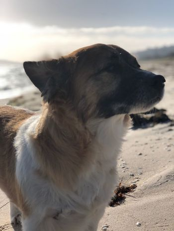 Dreaming doggy dreams One Animal Animal Animal Themes Domestic Animals Pets Dog Beach Sand Canine No People Day Close-up