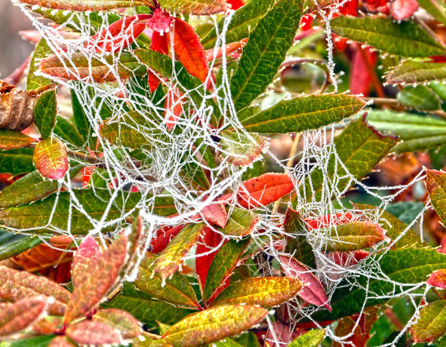 Backgrounds Beauty In Nature Cactus Close-up Day Fragility Freshness Green Color Growth Leaf Nature No People Outdoors Plant Spider Web Tree First Eyeem Photo