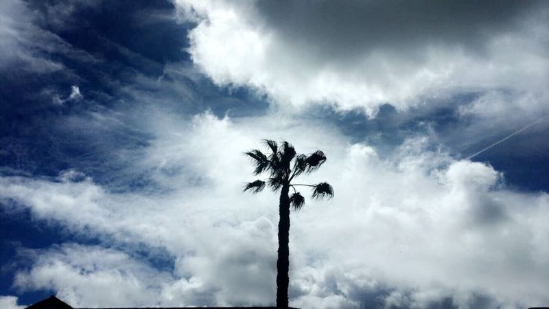 Lonely Palm Low Angle View Cloud - Sky Sky Nature Beauty In Nature Scenics Growth Los Angeles, California