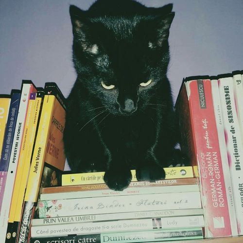 Domestic Cat Feline Animal Animal Themes Domestic Animals Pets No People Photography BookLovers Book One Animal