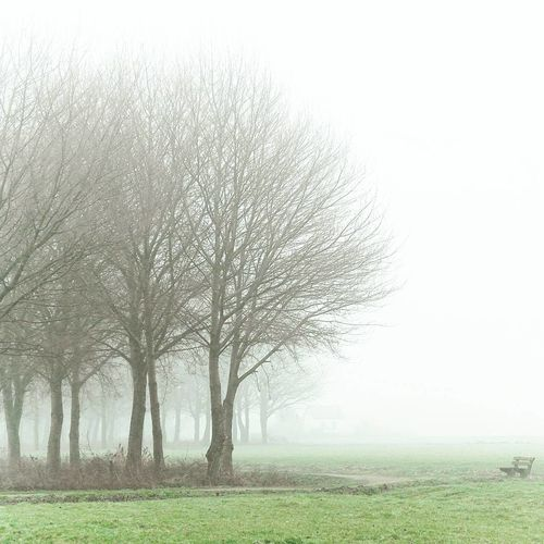 Ride home. Tree Grass Nature No People Fog Tranquility Beauty In Nature Tranquil Scene Landscape Outdoors Sky Day Tree Photography Countryside Peacefulness Adventure Is Out There Outdoors Photograpghy  Outdoor Life Calm WoodLand