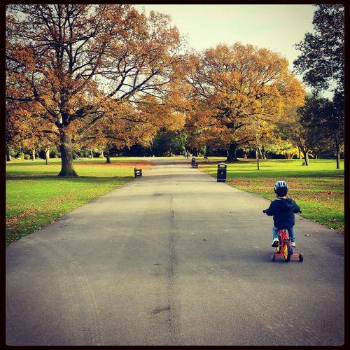 Autumn Colors Autumn Autumn Leaves Bike Ride