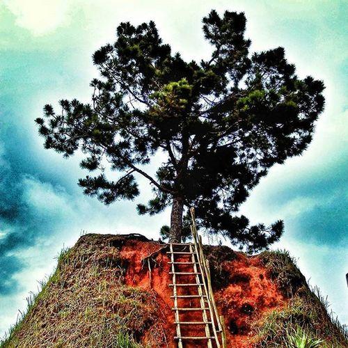One 🌲tree hill. Taman Simalem Resort⛅⛅☁☁. North Sumatra, Indonesia. Tamansimalem Simalemresort OneTreeHill Exploresumut Detailsumatera Nusantarakita