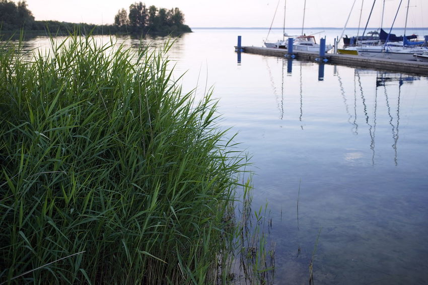 Marina Müritz-Nationalpark Müritzsee Beauty In Nature Day Grass Green Color Growth Lake Mode Of Transportation Moored Müritz Nature Nautical Vessel No People Outdoors Plant Reflection Scenics - Nature Tranquil Scene Tranquility Transportation Water