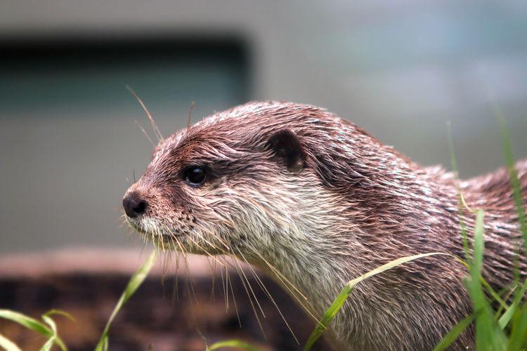 Otter Otter