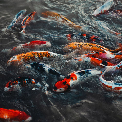 Fish swimming in a lake
