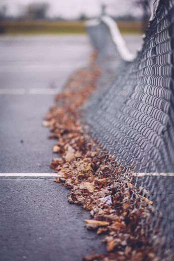 Autumn leaves by net at tennis court