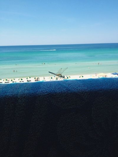 Dragonfly Panama City Beach Check This Out Beach Life EyeEm Gallery