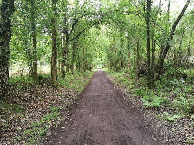 Forest Of Dean Nature Outdoors Beauty In Nature No People Forest Landscape