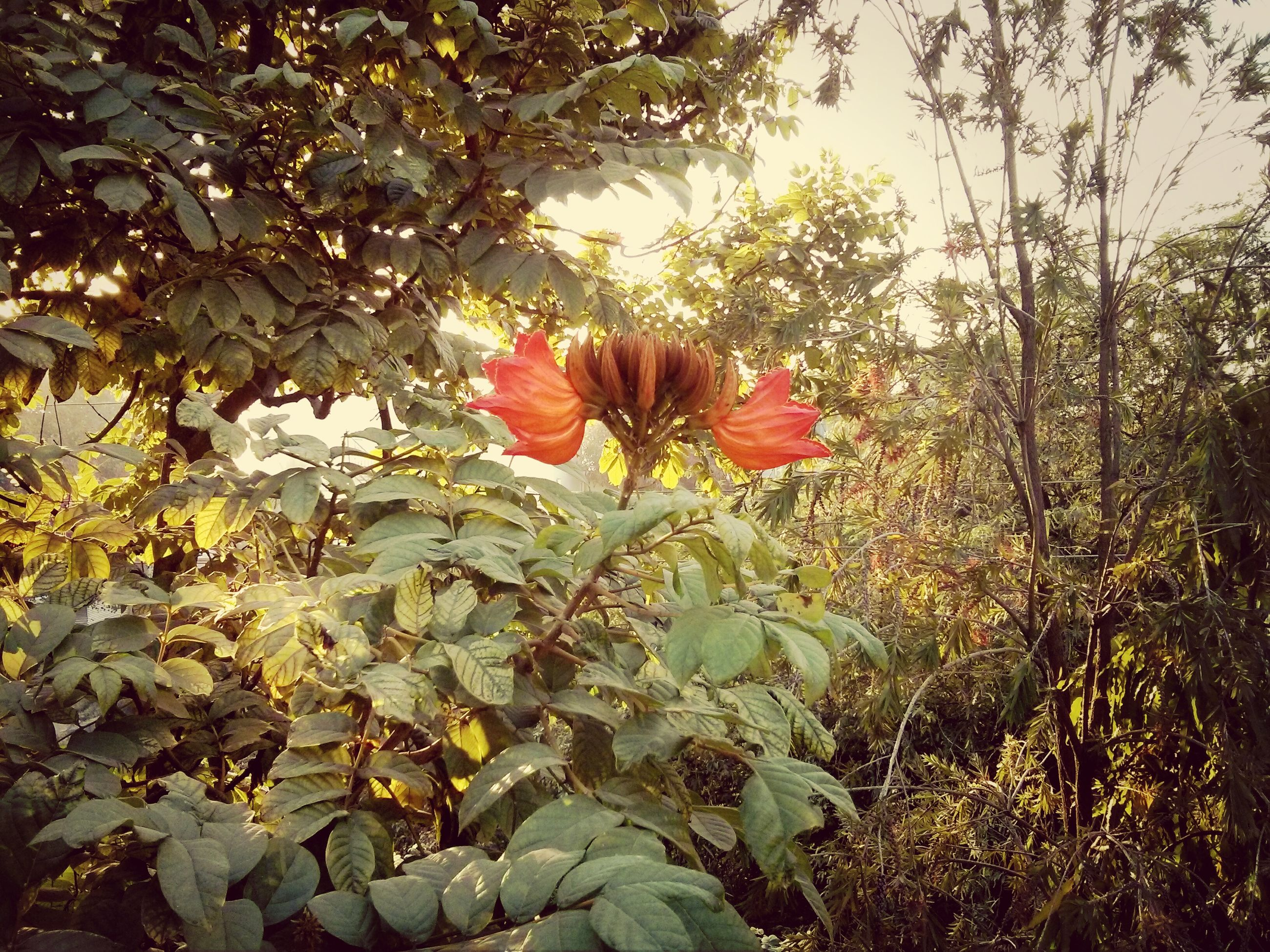 flower, growth, petal, beauty in nature, leaf, fragility, freshness, nature, plant, red, flower head, blooming, tranquility, in bloom, day, field, sunlight, outdoors, blossom, no people