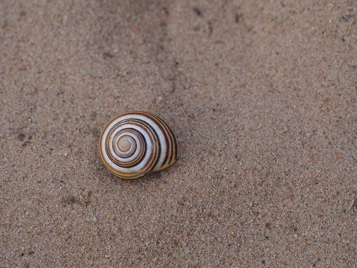Close-up of a snail on sand