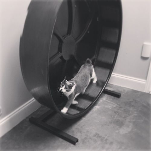 Monthofgood 360i Catwheel