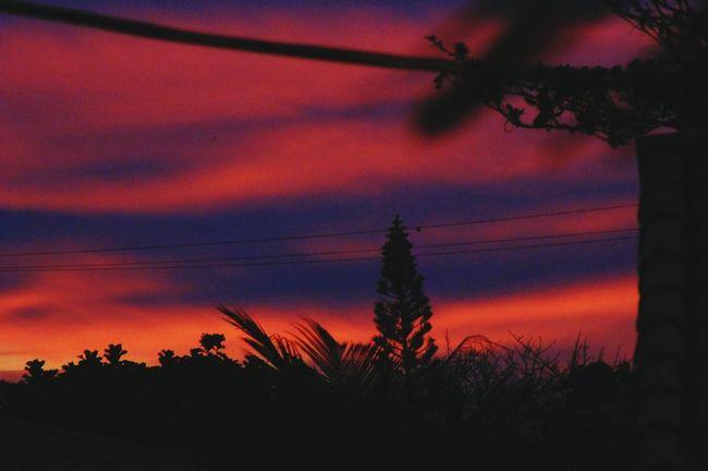 só saudade do céu de búzios, não há igual! Nature Photography Liasaarfe Sky Porn Sky Pink Tree Buzios❤