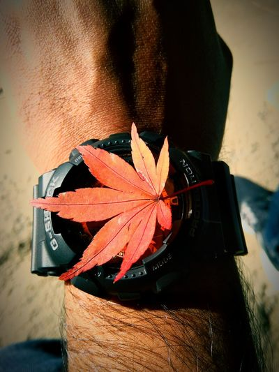 Time stopped in Autumn.. Watch Gshock Autumn Momiji End EyeEm Selects Close-up Outdoors