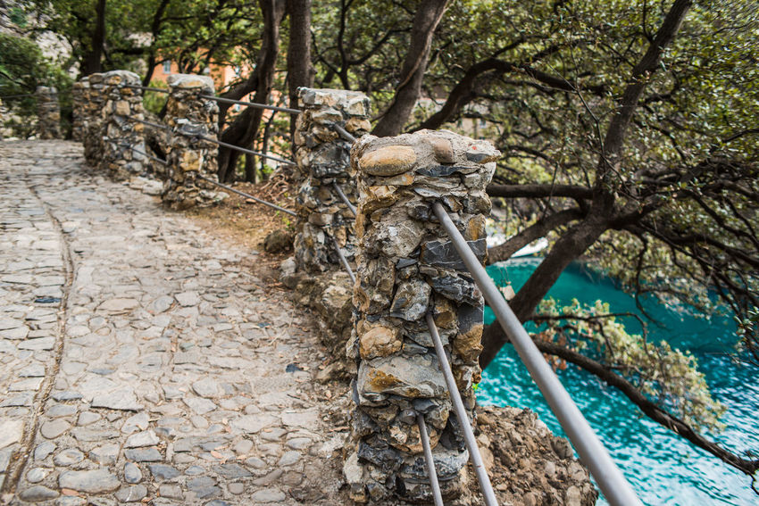 @ Portofino Regional Natural Park, Liguria, Italy Railing San Fruttuoso Di Camogli Beauty In Nature Branch Cliff Day Forest Nature No People Outdoors Park Pathway Pavement Promontory Root Sea Seaside Tree Tree Trunk Water