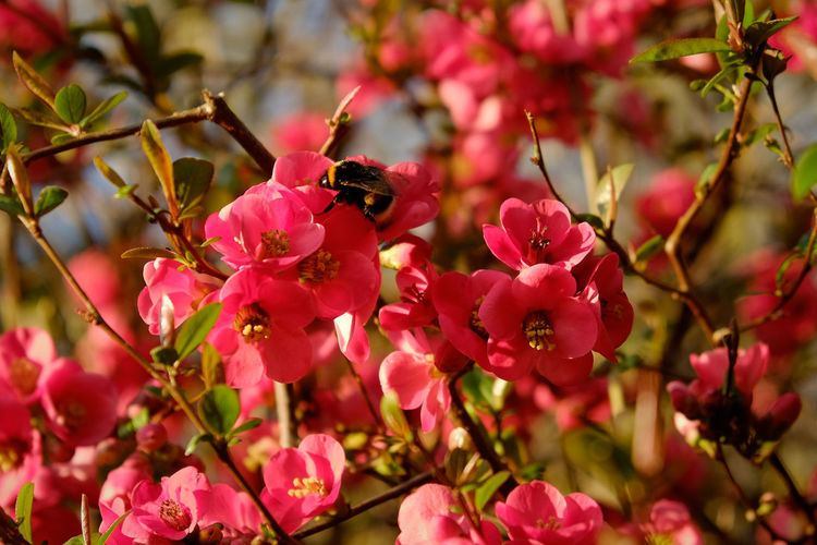 Close-up of insect on pink flowering plant