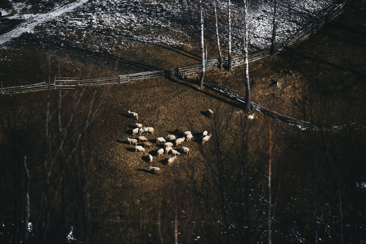 Aerial View Agriculture Animal Animal Photography Animal Themes Animal_collection Animals Beauty In Nature Day Land Large Group Of Animals Light And Shadow Livestock Mammal Mountains Nature Nature Nature_collection No People Outdoors Sheep Sheeps Sky Tree Valley