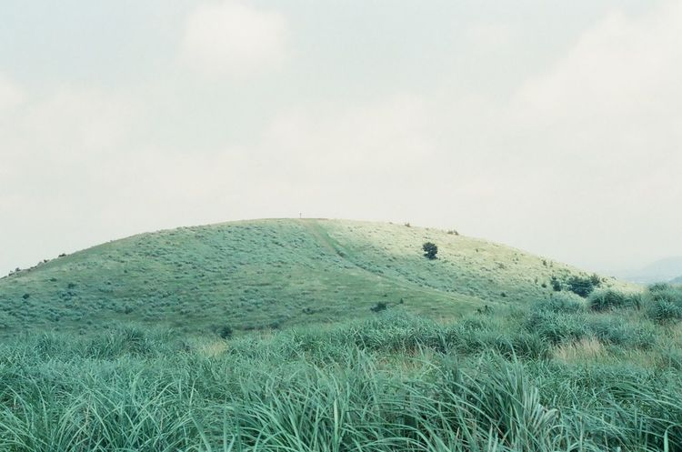 Cinestill 35mm Film Beautiful Nature Hiking Green Grass Film Photography JEJU ISLAND  용눈이오름