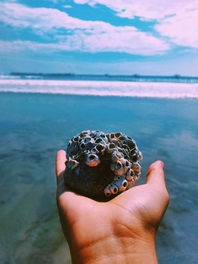 Cropped hand holding barnacles against sea