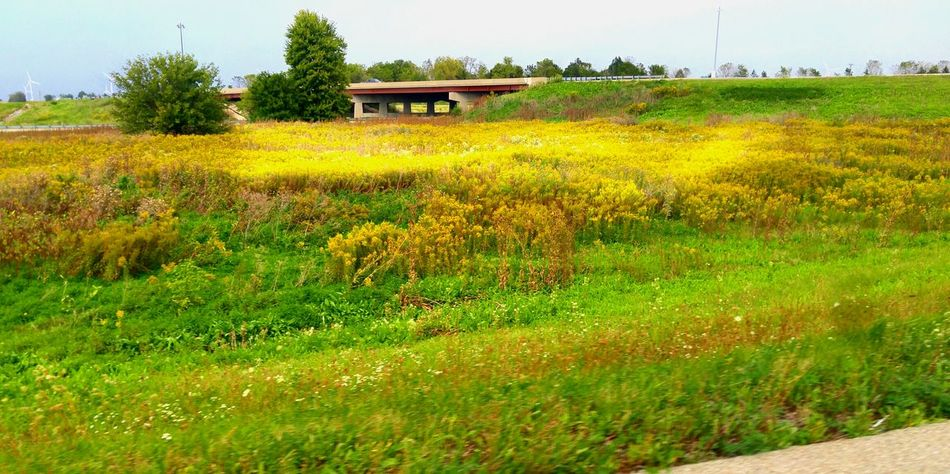 Field Grass Outdoors Scenics Pleasant Day Nature Midwest Living Illinois Summer End Of Summer Taking Off Agriculture Interstate View Traveling Road And Field