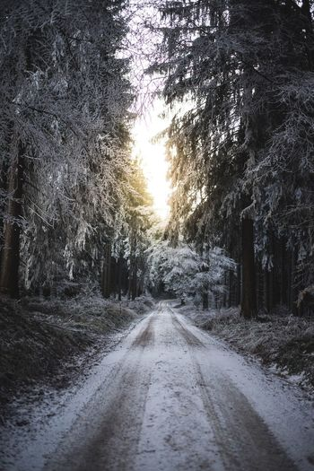 The Way Forward Tree Nature Empty Road Road Diminishing Perspective Outdoors Winter Snow Scenics Beauty In Nature Cold Temperature Sundown