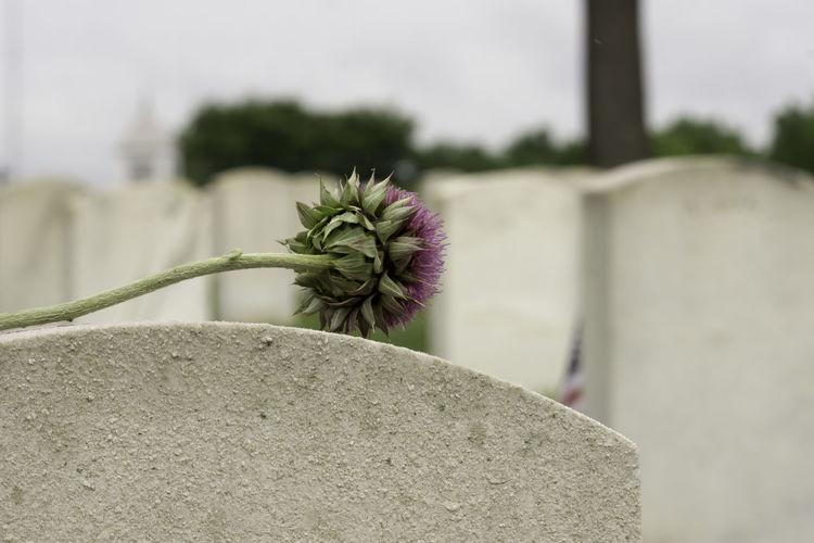 Cemetery Memorial Memorial Day Flower Gravestone Remember Remembering Remembrance The Still Life Photographer - 2018 EyeEm Awards