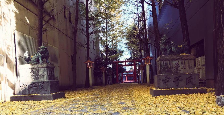 hanazono-jinja Architecture Plant Day My Best Travel Photo Nature Outdoors Sunlight Tree No People