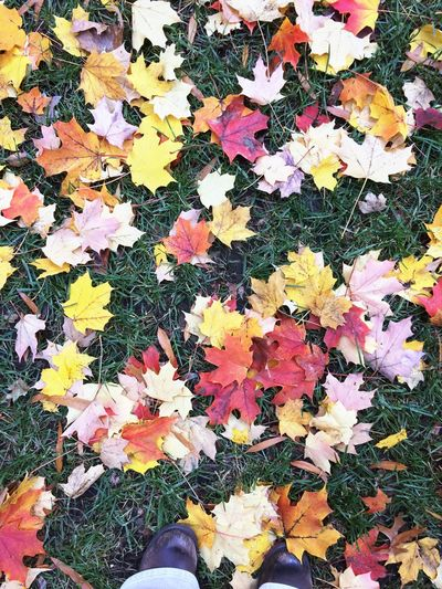 High angle view of maple leaves on plant at field