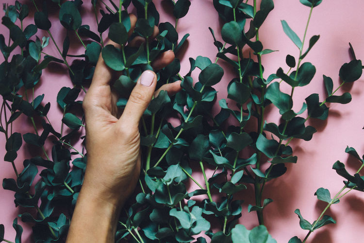 High angle view of person hand holding leaves