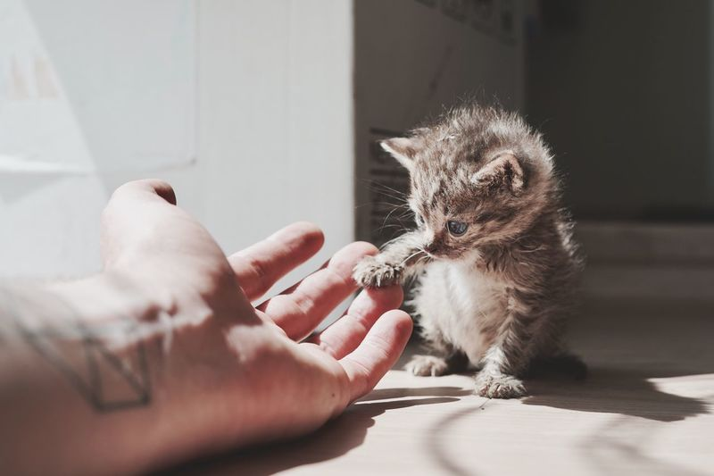 Close-up of hand touching kitten