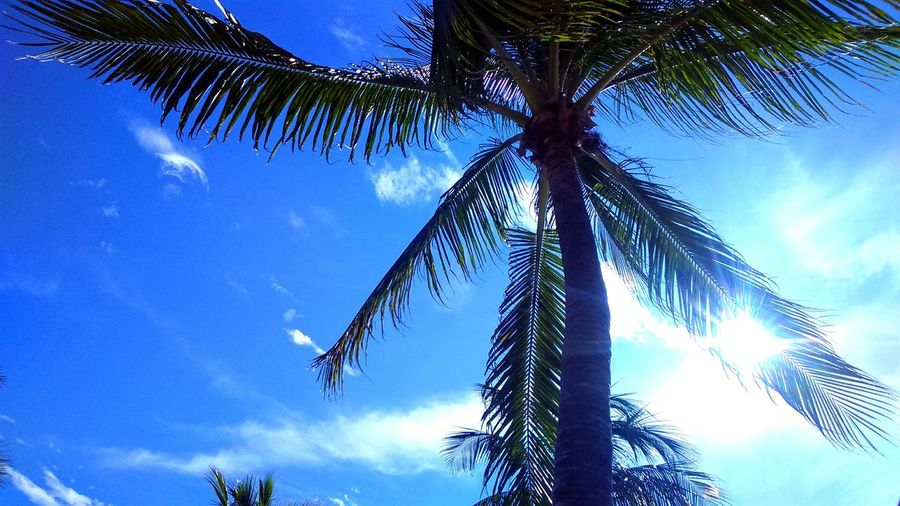 Aventure Time Beach Landscape Beutiful  Popular Photos Mexico Oaxaca Palms Palm Tree Mar Sol