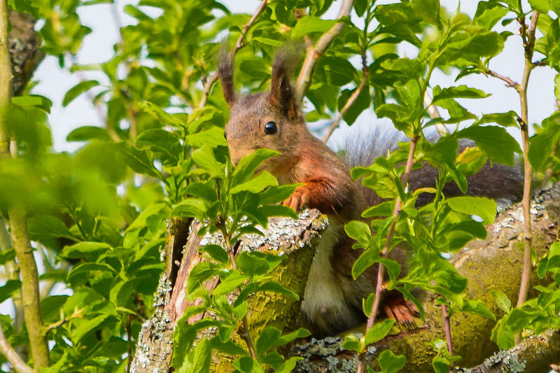 Squirrel perching on branch
