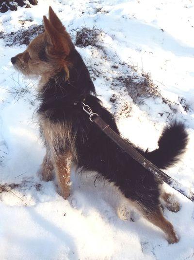 Marley, The Dog.