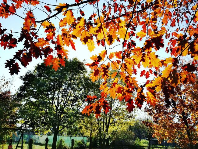 Tree Low Angle View Nature Beauty In Nature Day Outdoors No People Leaf Falls Redorangeyellow Greeninbackground Loveit