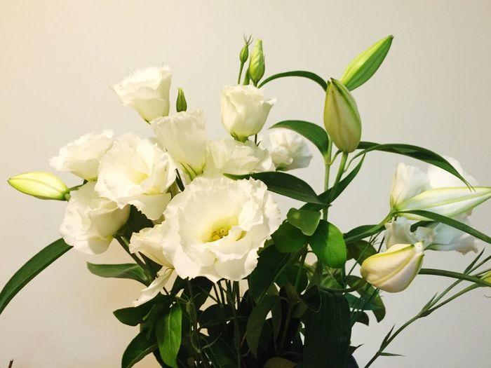 Love Fresh Cut Flowers Pray For Tainan