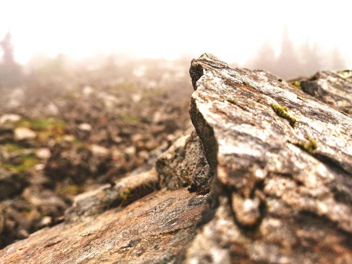 Life Ejoying Life Nature Beauty Hello World