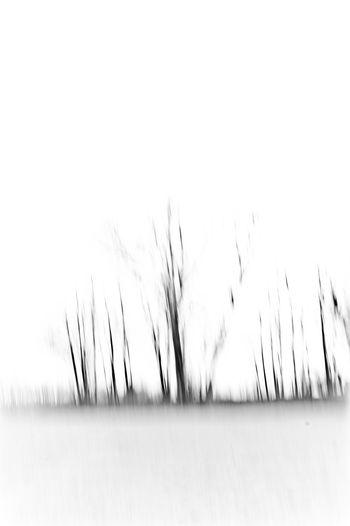 Blackandwhite Fine Art Photography Interiors Design Treescape Vertical White