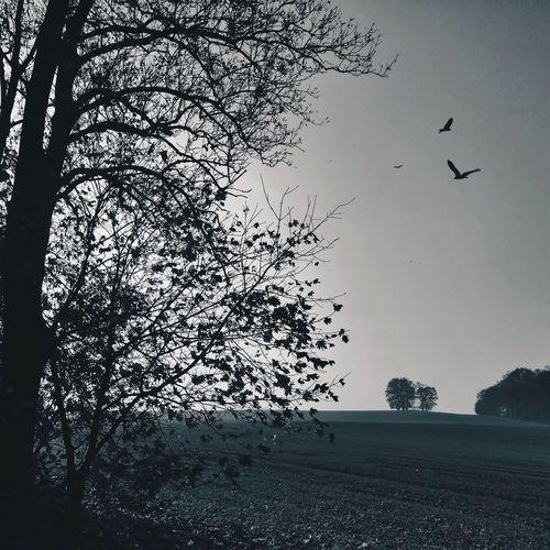 Bird flying over bare trees