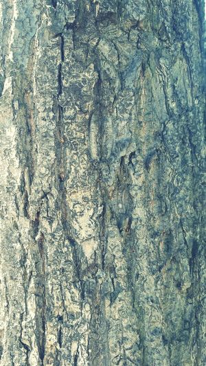 Nature Check This Out tree Taking Photos bark