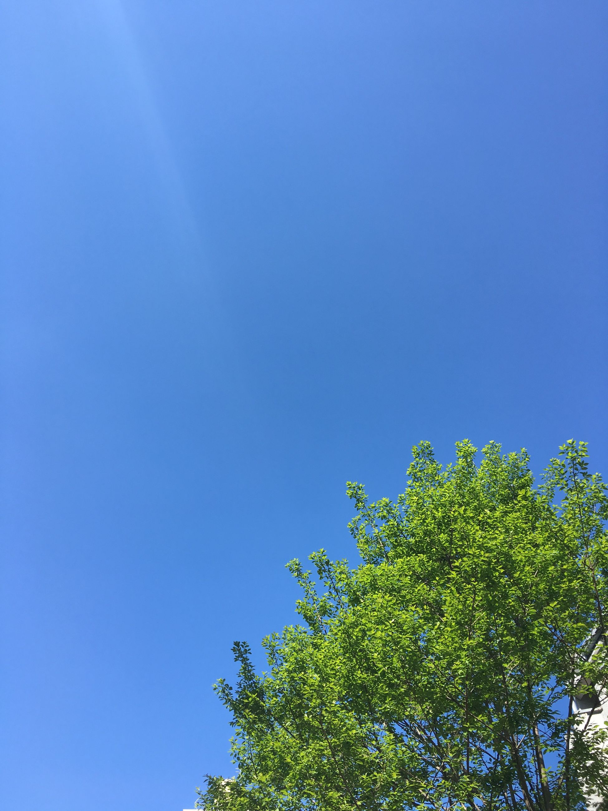 blue, low angle view, tree, nature, clear sky, growth, sky, no people, day, beauty in nature, outdoors