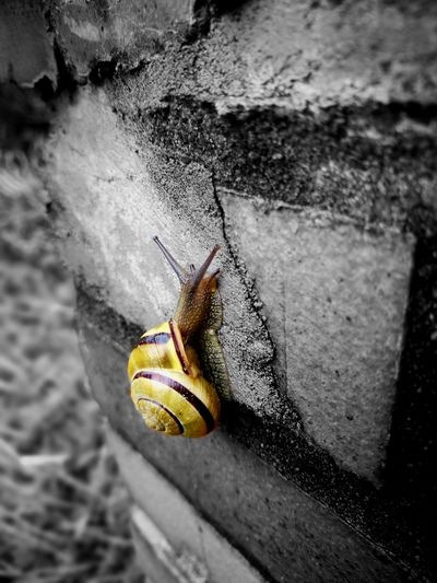 Snails Snail Collection Snail Closeup Snail Snail Photography Snail🐌 One Animal Animals In The Wild Animal Themes Outdoors No People Close-up Nature Blackandwhite Black And White Black & White Blackandwhite Photography Black&white Blackwhite
