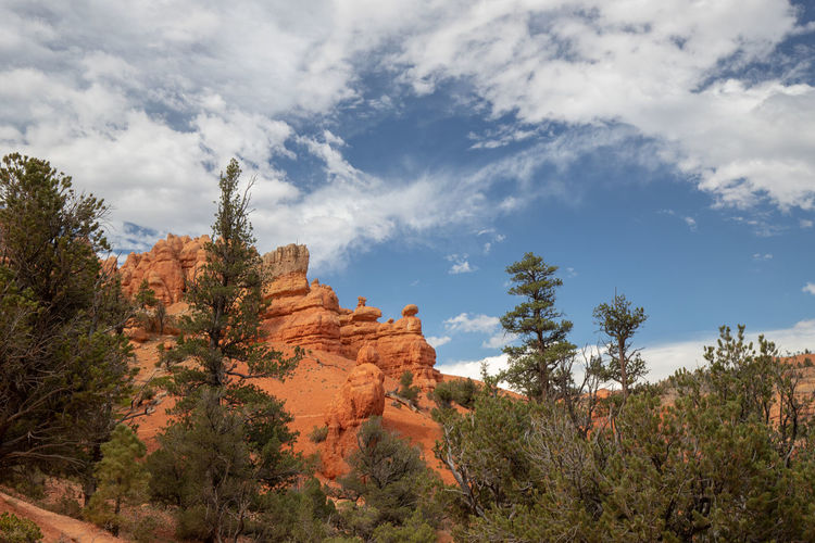 Red Canyon in Utah, USA - the smaller brother of the world famous Bryce Canyon Cloud - Sky Sky Non-urban Scene Beauty In Nature Scenics - Nature Nature No People Tranquil Scene Tranquility Red Canyon Red Canyon State Park, Utah USA National Park Plant Tree Rock Rock Formation Rock - Object Environment Landscape Solid Growth Land Outdoors Eroded