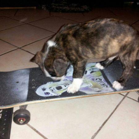 pro skater ENJOI Skate Redz Diamond spec