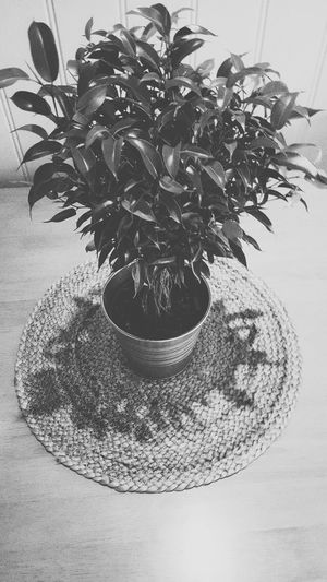 Simple Photography Summer Inndor Plant Bucket Decoration Home Blackandwhite Black And White Table Taking Photos