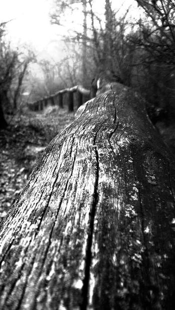 Bar Handhold Tree Outdoors Tree Trunk Nature No People Textured  Wood - Material Forest Black & White Winter Beautiful Nature Old Town Darkness And Light Black And White Landscape Cold Temperature Architecture Fence