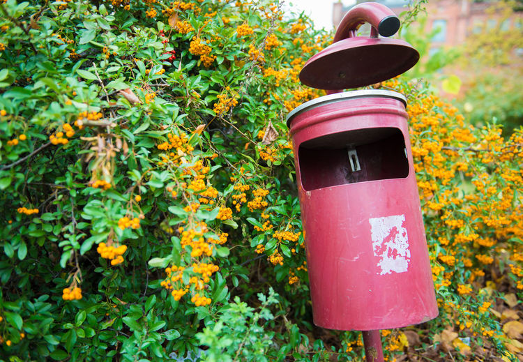 Red garbage Can at park Plant Day Nature No People Growth Yellow Outdoors Flowering Plant Flower Close-up Focus On Foreground Plant Part Leaf Lighting Equipment Beauty In Nature Freshness Tree Green Color Autumn Container Electric Lamp
