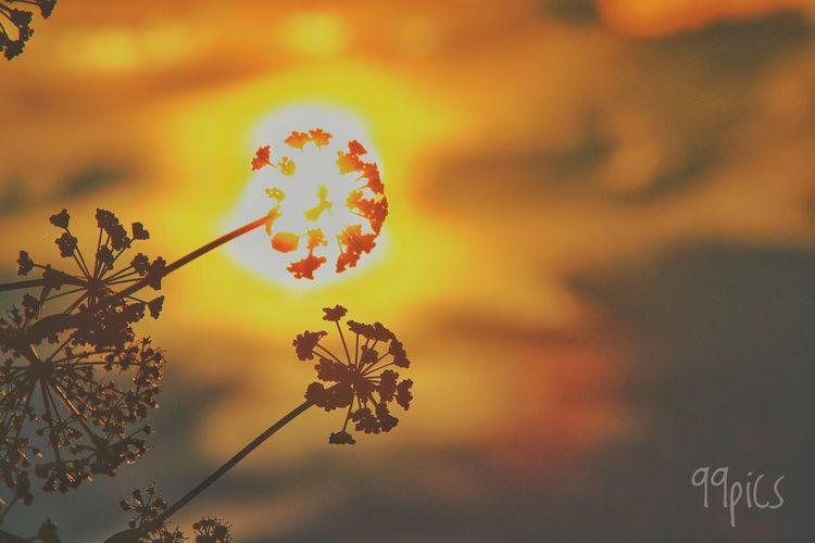 Dos eran dos, y sobre ellos, tu piel. Walking Contigo Te Vienes A Mi Mundo?  Siempre Nos Quedará El Liroy Floristero, Floristero, Tienes De Lo Mío? Tu Luz Es La Mía. Www.todossomosrosas.com Lilas, Que Eres Un Lilas Y De Repente, Tu Historias De Amor Donde Esté Manolo Camionero Que Se Quite Spotify Violetéame Cada Mañana.com Plant Beauty In Nature Nature Sky Sunset Flower Orange Color No People Tranquility Sunlight Plant Part